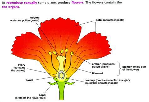plant reproduction diagram flower structure bed mattress sale