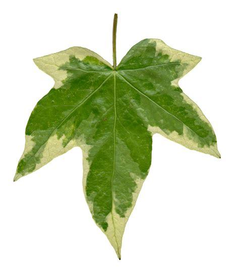 high resolution seamless textures leaf textures