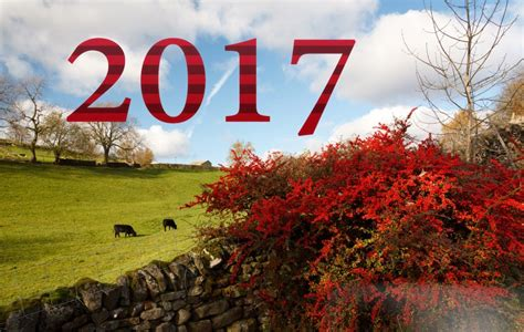 happy  year  hd wallpapers   fun