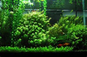 vital for plant growth, but too much in the water will kill your fish