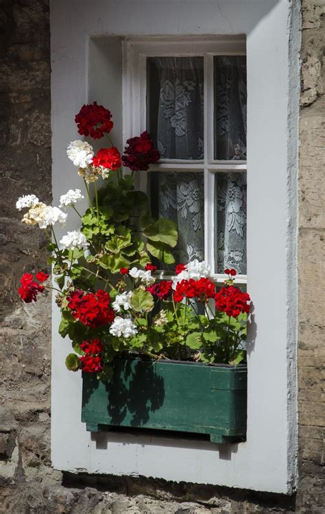 window sill flower boxes 220 best images about window boxes on window