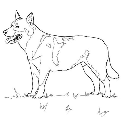 australian shepherd coloring pages dog breed coloring