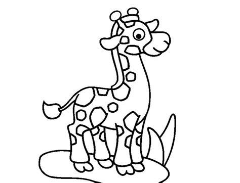 imagenes de jirafas para pintar dibujos para colorear animales del zool 243 gico jirafa