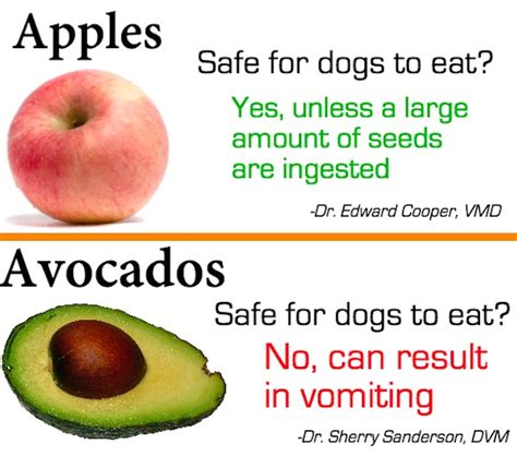 apples ok for dogs infographic fruits that are safe and unsafe for your to consume designtaxi