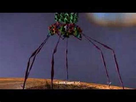 the big picture book of viruses image gallery t4 bacteriophage