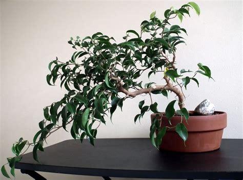 piante per interni resistenti piante da appartamento resistenti piante da interno