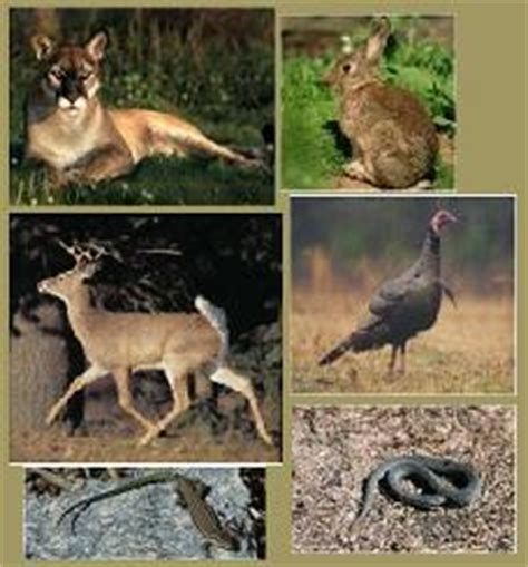 imagenes de animales de zacatecas localizaci 243 n geogr 225 fica y clima de jerez
