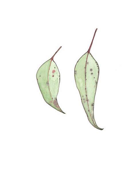 printable gum leaves gum leaf watercolour gum leaves print eucalyptus leaves