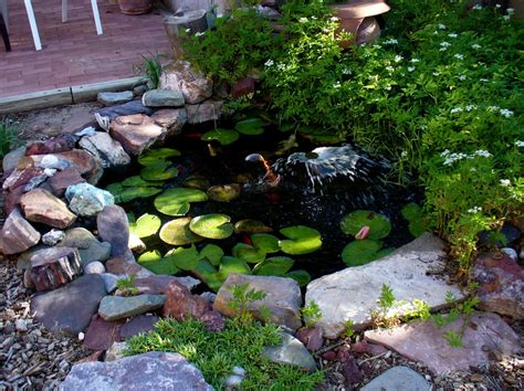 Backyard Pond Ideas Small Garden Fish Pond Ideas Backyard Design Ideas