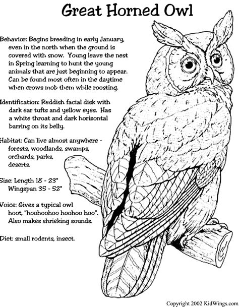 snowy owl diagram great horned owl other bird info plants and animals