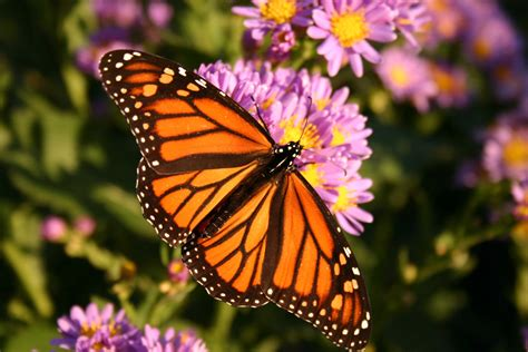 Big Butterfly god has created this