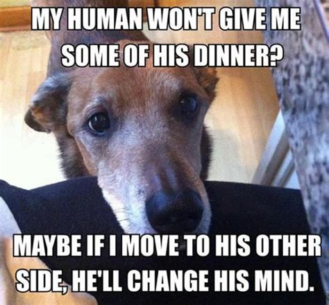 32 hilarious struggles only dog owners will understand