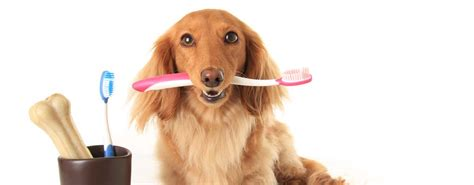 dogs review best toothbrush 2018 review of 10 toothbrushes for dogs