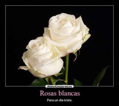 imagenes de luto rosas blancas imagenes de rosas blancas con frases imagui