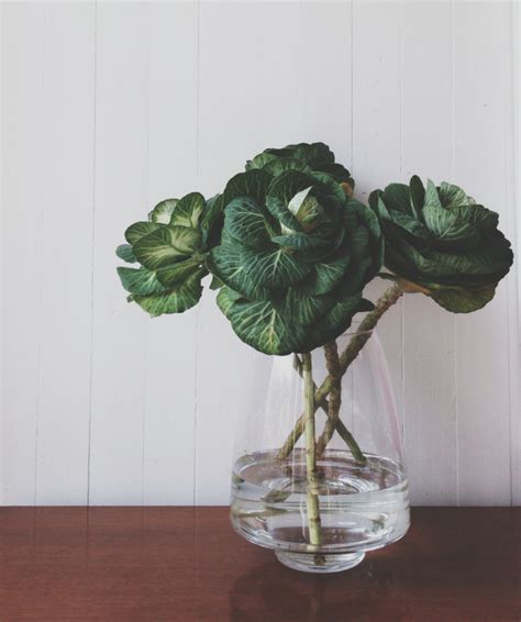ornamental cabbage indoors ornamental cabbage looks like roses how to make a