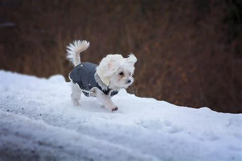 powell s puppy palace get your pet ready for the winter pet palace pet boarding resort