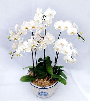 florist jakarta toko bunga  jakarta indonesia