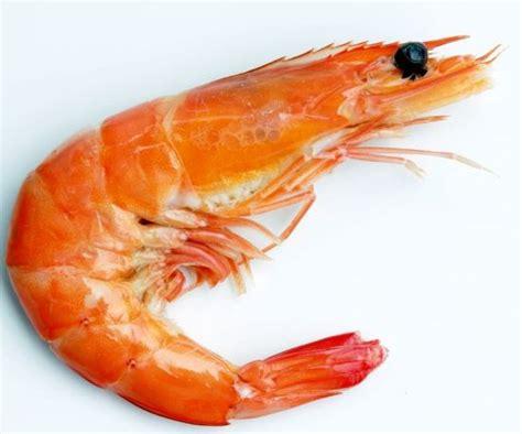 shrimp efresh com