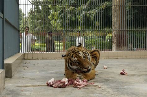 Karachi Address Finder Image Gallery Karachi Zoo