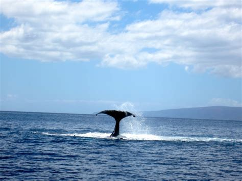 Whale watching at molokini crater maui places to remember pinter