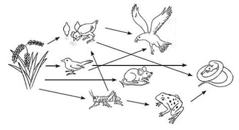 Bio Yang Kecil ringkasan bio kelas 7 ekosistem januari 2013 step by