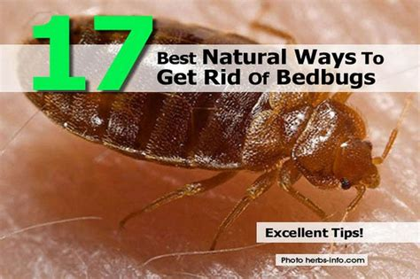 best way to get rid of bed bugs 17 best natural ways to get rid of bedbugs