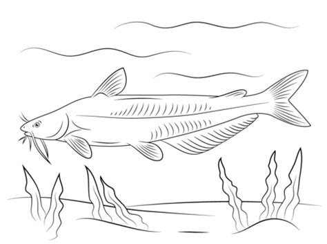 blue catfish coloring page  printable coloring pages