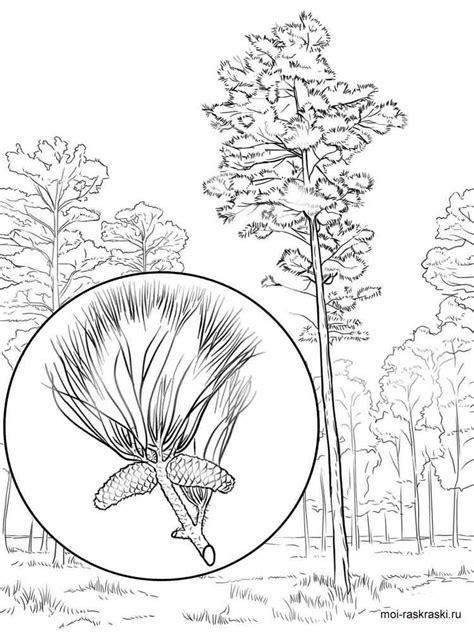 elm tree coloring page elm coloring pages