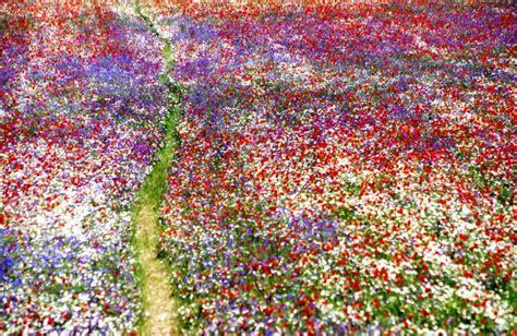 prati in fiore pota pota 55 0 e primavera belli quei prati