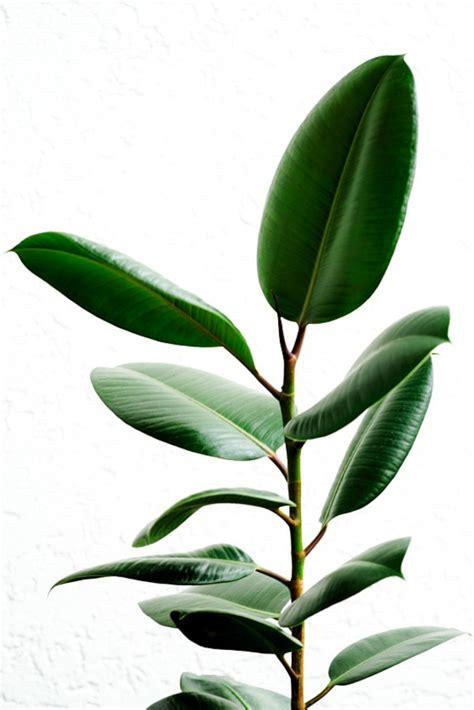 zimmerpflanzen gross gr 252 ne zimmerpflanzen bl 252 hende pflegeleichte topfpflanzen