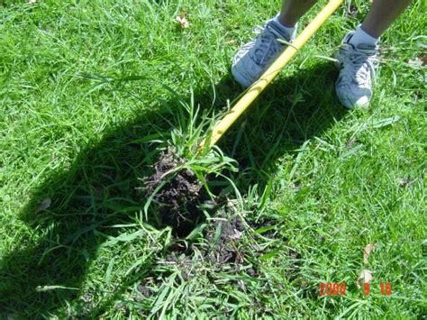 Grass Removal by Crabgrass Removal Killer Crab Grass