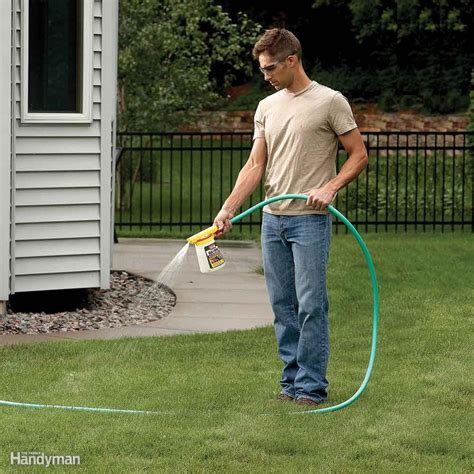 ants in backyard how to get rid of ants the family handyman