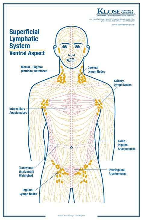 lymphatic drainage system diagram danielle podrazil no breast cancer stuff