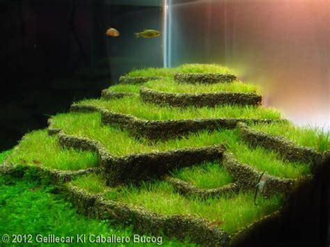 aquascape inspiration inspirational aquascape 3 apsa