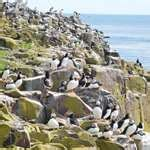 farne islands boat trips prices the six best places to see welsh wildlife