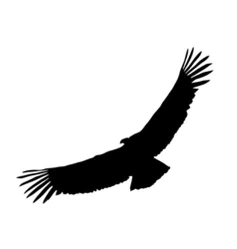condor stock vectors royalty free condor vector images 120 vectorstock