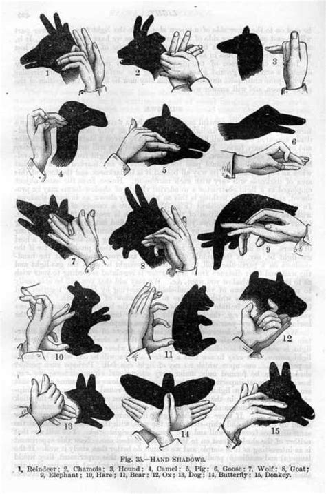 How To Make Paper Shadow Puppets - perform a shadow puppet show diy