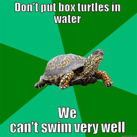 Funny Turtle Memes - torrenting turtle memes quickmeme