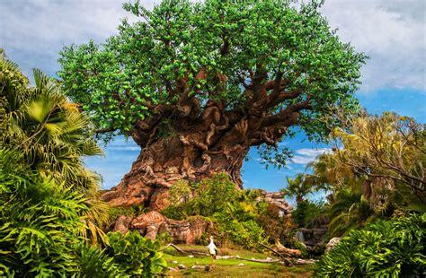 imagenes disney animal kingdom secretos de animal kingdom disney blogs