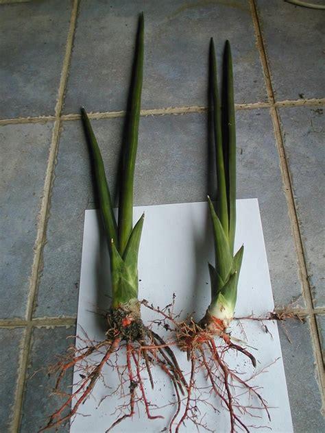 plants flowers bow string hemp