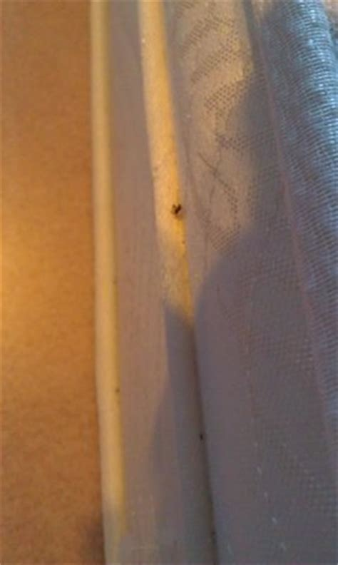 Caribe Royale Orlando Bed Bugs by Bedbugs Picture Of Westgate Lakes Resort Spa Orlando