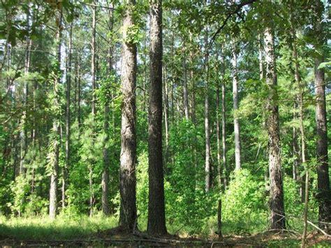 land and timber screven county ga 65 acres green hill land and
