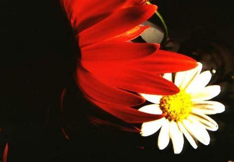 fiore reciso il fiore reciso dol s magazine