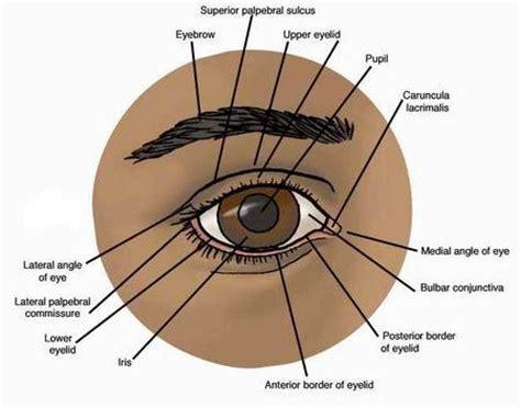 eye problems pictures eye diseases symptoms causes diagnosis eye diseases treatment