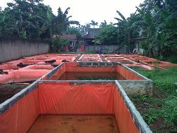Bibit Lele Sangkuriang Sawangan Depok sangkuriang de farm home