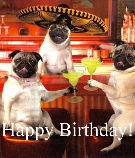Birthday Pug Meme - 1000 ideas about happy birthday meme on pinterest funny