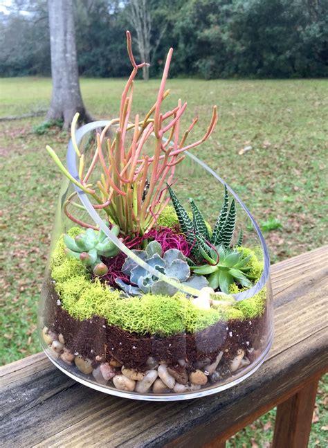 succulent container garden ideas succulent garden in glass container my garden your