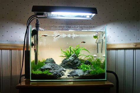 inilah  ide kreasi  membuat mini aquascape ikan