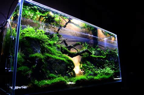 Freshwater Aquascaping Ideas by Benefits Of Aquarium Fish Tanks Decoration Fish Tank Best