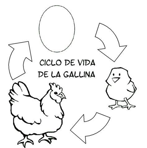 imagen para colrear del ciclo de vida conejo dibujos de gallinas para colorear y pintar